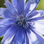 Blau 5