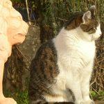 Katzen-1