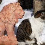 Katzen 2