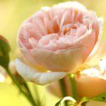8 Sweet Juliet