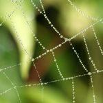 5 Spinnenetz